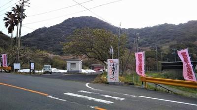 018ながと青海島千本桜まつり準備完了1.jpg