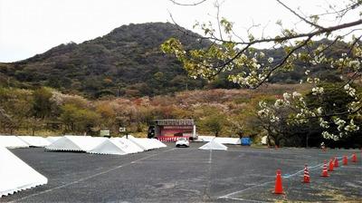 018ながと青海島千本桜まつり準備完了2.jpg