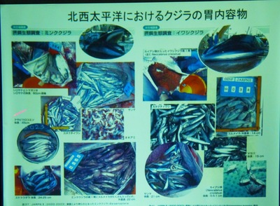 10北西太平洋におけるクジラ胃内容物.jpg