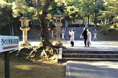 10香山墓地・うぐいす張り石畳.jpg