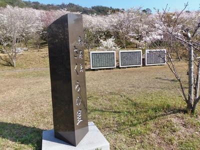 2014年4月1日の桜1.jpg
