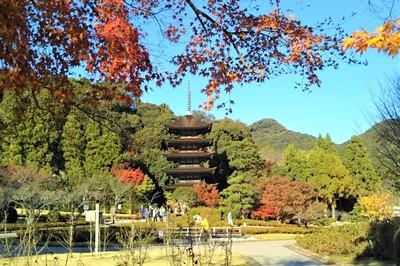 3国宝瑠璃光寺五重塔と紅葉.jpg