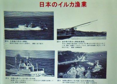 3日本のイルカ漁業.jpg