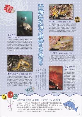 3青海島の海で出会える魚たち.jpg