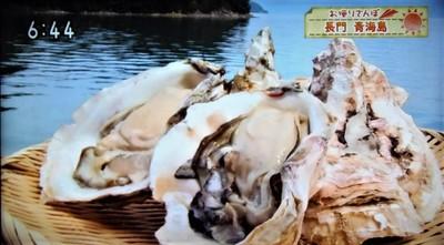 5青海島岩がき.jpg