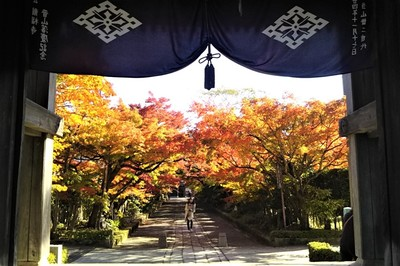 9山門と参道の紅葉.jpg