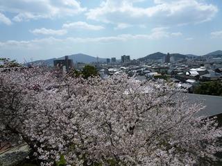 桜と防府市街.jpg