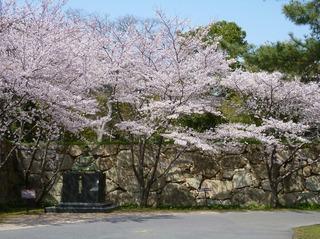 毛利輝元公と桜も祝福.jpg