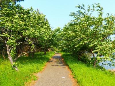 「波の橋立」遊歩道1.jpg