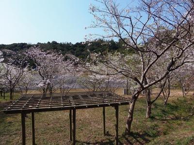 あずまやからの桜.jpg