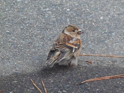 おすまし野鳥2.jpg