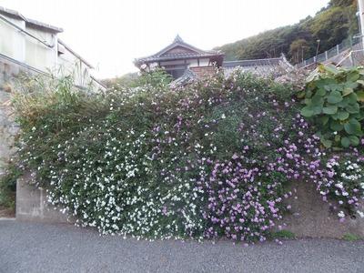 お花いっぱい.jpg