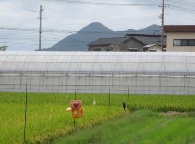 かかしと青海島・高山.jpg