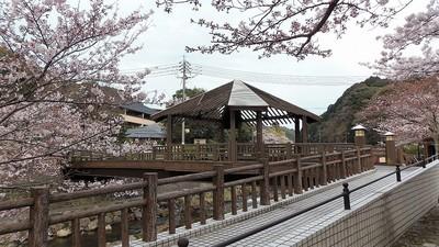 きらきら橋と桜1.jpg