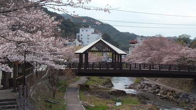 きらきら橋と桜2.jpg