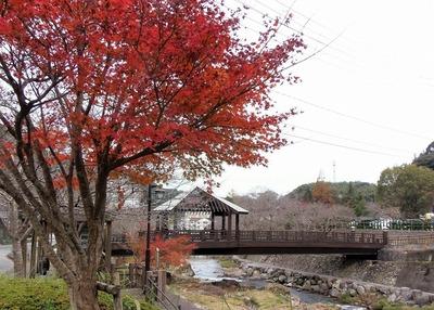 きらきら橋と音信川と紅葉.jpg