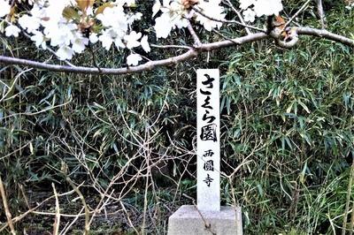 さくら園1.jpg