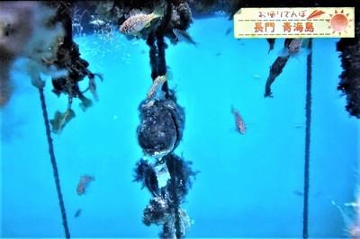 せむら牡蠣育成場.jpg