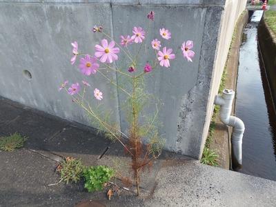 たくましい季節の花.jpg