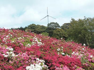 つつじと風車.jpg