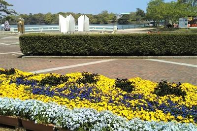 ときわ公園の季節の花6.jpg