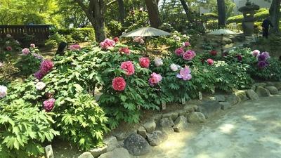 ときわ公園・ぼたん苑4.jpg