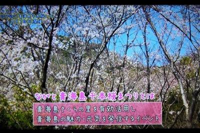 ながと青海島千本桜まつりとは.jpg