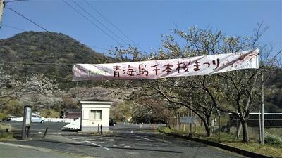 ながと青海島千本桜まつり会場1.jpg