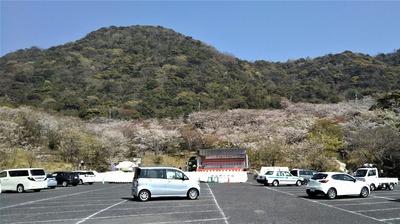ながと青海島千本桜まつり会場2.jpg