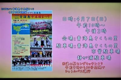 ながと青海島千本桜まつり会場・駐車場・シャトルバス.jpg