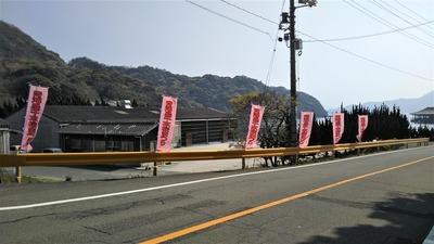 ながと青海島千本桜まつり幟旗.jpg