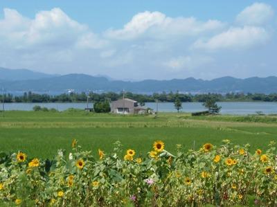 ひまわり・棚田・青海湖・波の橋立1.jpg