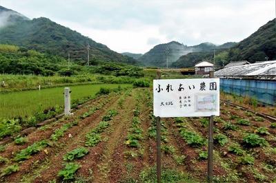 ふれあい農園サツマイモ畑.jpg