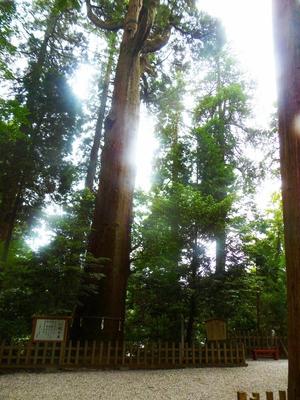 みやざきの巨樹百選.jpg