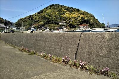もーら山と季節の花.jpg