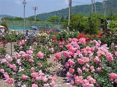 よしうみバラ公園4.jpg