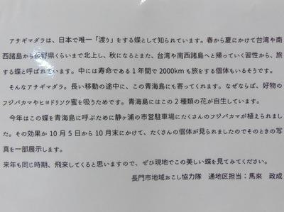 アサギマダラ説明1.jpg