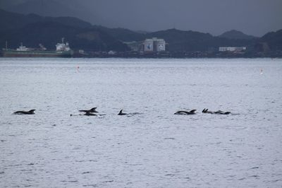 イルカの群れ1.jpg