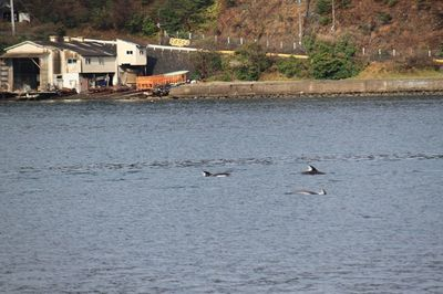 イルカの群れ2.jpg