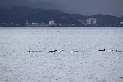 イルカの群れ3.jpg