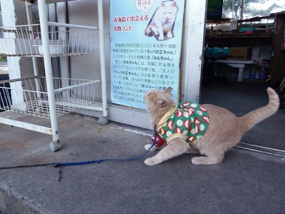 エサ代を稼ぐ猫「ももちゃん」.jpg