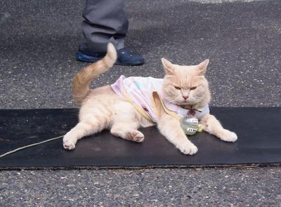 エサ代を稼ぐ猫「ももちゃん」1.jpg