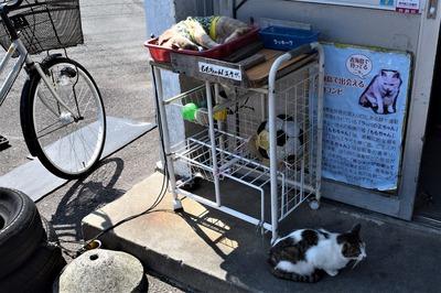 エサ代を稼ぐ猫「ももちゃん」と訪問猫.jpg