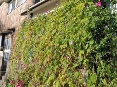 グリーン・季節の花カーテン2.jpg