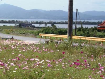 コスモスと波の橋立と青海湖2.jpg