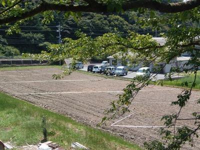 コスモスの造形畑2.jpg