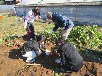 サツマイモ収穫2.jpg