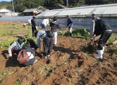 サツマイモ収穫4.jpg