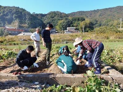 サツマイモ掘り1.jpg