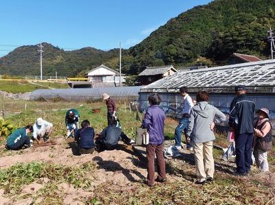 サツマイモ掘り2地元の方も.jpg